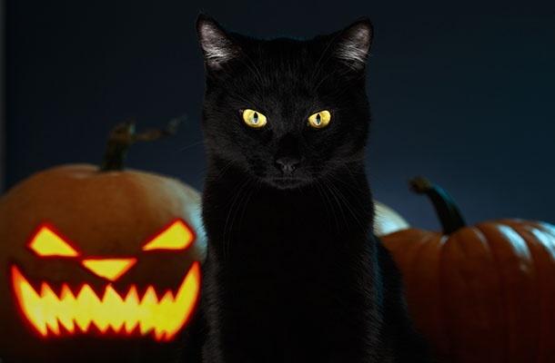 ATL_Week 4_Halloween_610x400.jpg