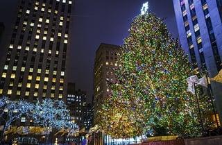 LLBlog_Tree_610x400.jpg
